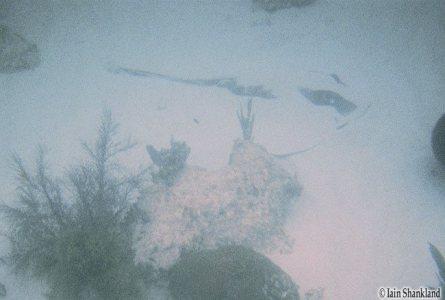 03.07.05 - FLAkeysSnorkel Ia-06w