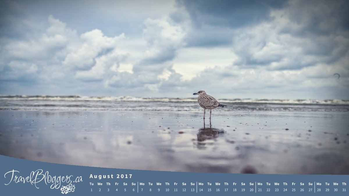 August 2017 Desktop Wallpaper Now Available!