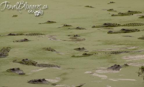 Everglades Alligator Farm © 2013 ~ Iain & Gail Shankland  / TravelBloggers.ca@gmail.com