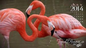 travelbloggers.ca, safari niagara, flamingo