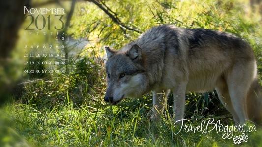 TravelBloggers.ca, Wolf Park, wolfpark.org, Battle Ground Indiana