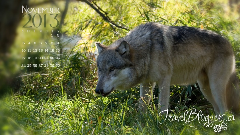 TravelBloggers.ca, Wolf Park, wolfpark.org, Battle Ground Indiana, Monty Sloan Seminar