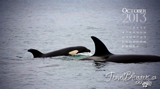TravelBloggers.ca, Whale Watching, Killer whales, Orca, Monterrey California