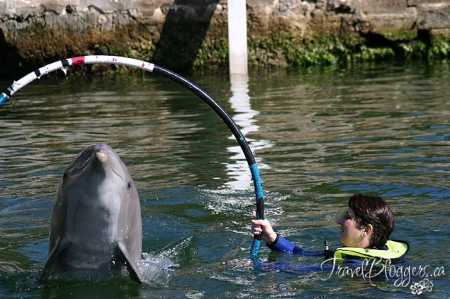 Dolphins Plus - Key Largo, Florida, Natural Dolphin Swim, Structured Dolphin Swim
