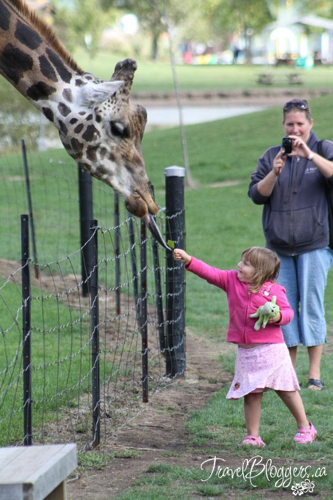 Safari Niagara, TravelBloggers.ca