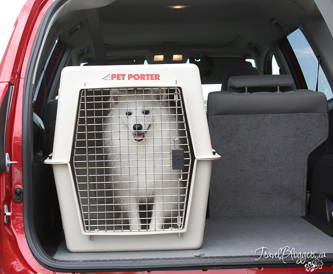 Pet Restraints - Think About Your Fur-kid's Safety On Your Next Vacation, TravelBloggers.ca