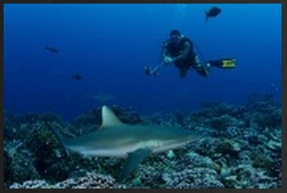 Sharks Ecotourism Could Double in Next Two Decades