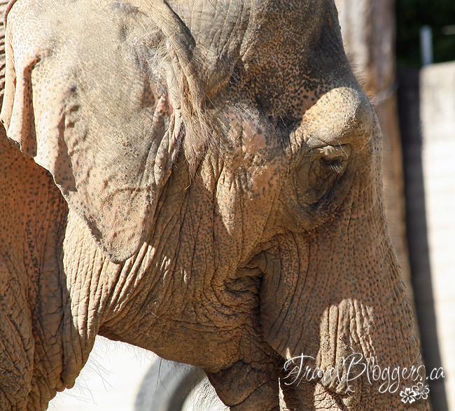 Karlsruhe Zoo 050w