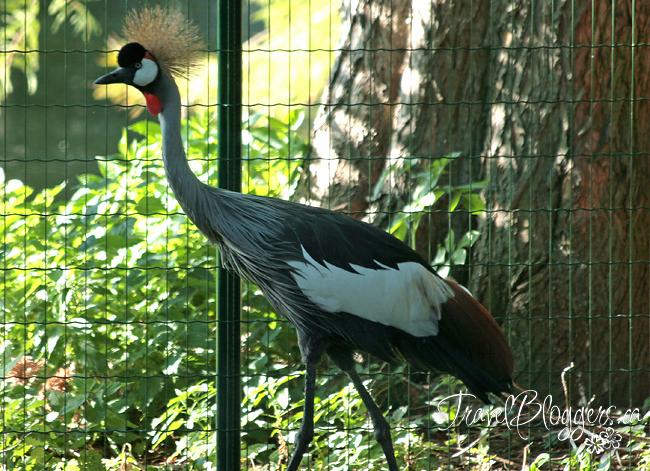 Karlsruhe Zoo 149w