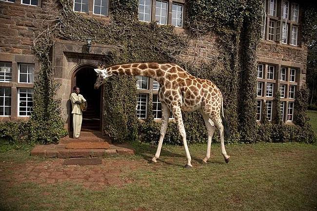 Giraffe Manor, Lang'ata Nairobi, Kenya -12