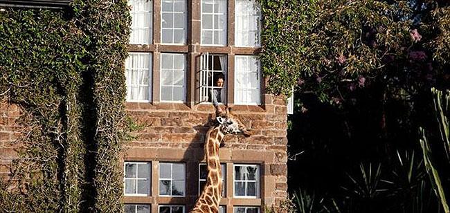 Giraffe Manor, Lang'ata Nairobi, Kenya -3