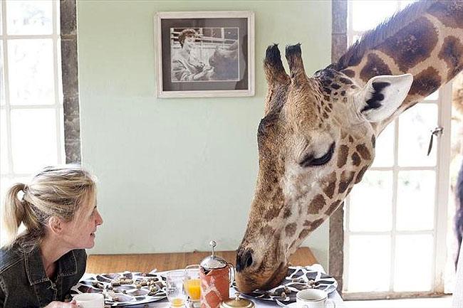 Giraffe Manor, Lang'ata Nairobi, Kenya -4