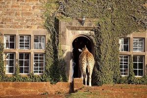 Giraffe Manor, Lang'ata Nairobi, Kenya -5
