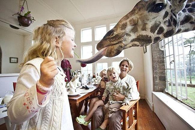 Giraffe Manor, Lang'ata Nairobi, Kenya -6