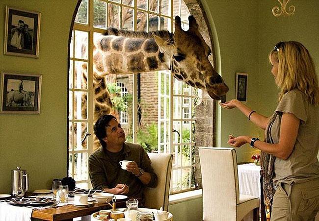 Giraffe Manor, Lang'ata Nairobi, Kenya -8