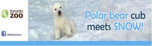 Toronto Zoo, TravelBloggers.ca, Polar Bears