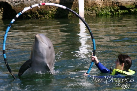 TravelBloggers.ca, Swim With Dolphins
