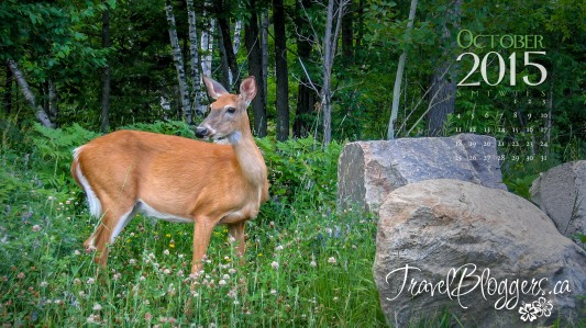 TravelBloggers.ca, White Tailed Deer, Mount Tremblant, Quebec, Canadian Wildlife