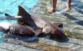Exuma, Swimming With Sharks, TravelBloggers.ca