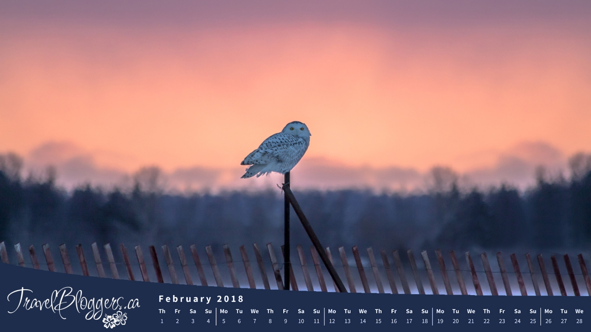 February 2018 Desktop Wallpaper Now Available!